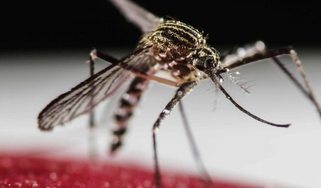 Registra Costa Rica un incremento del 76 % en casos de dengue