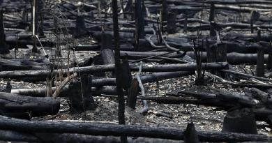En pocas décadas, ecosistemas como el Amazonas podrían colapsar