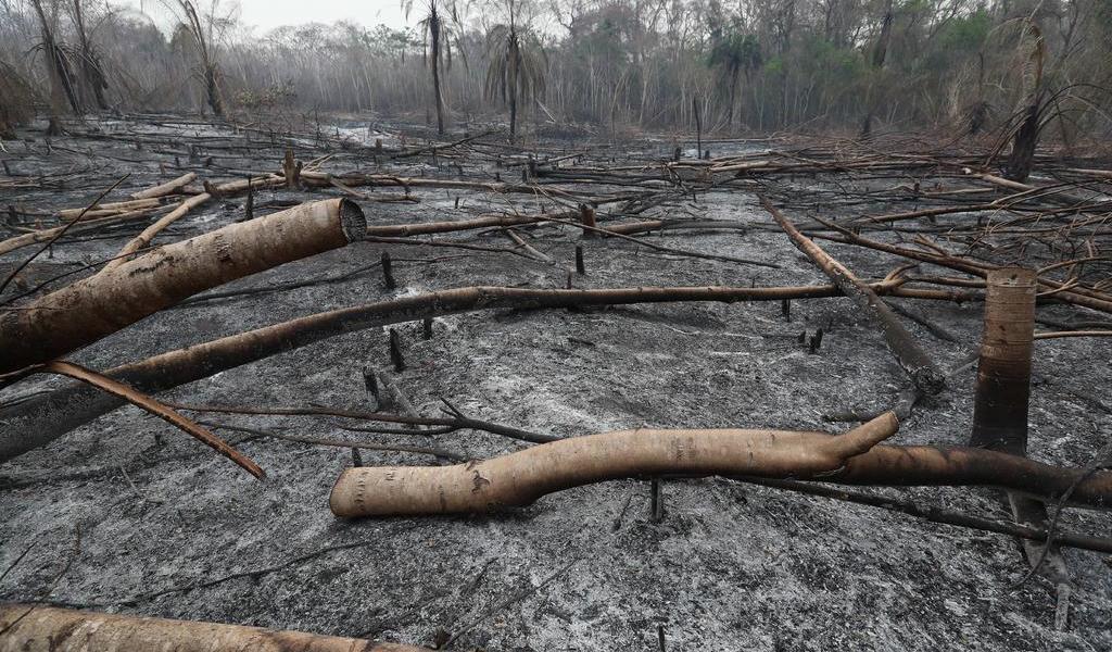 Deforestación en la Amazonía crece 171 %