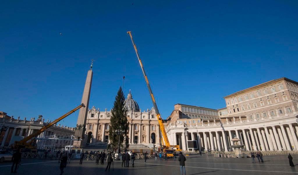 Inicia montaje del árbol de Navidad en el Vaticano