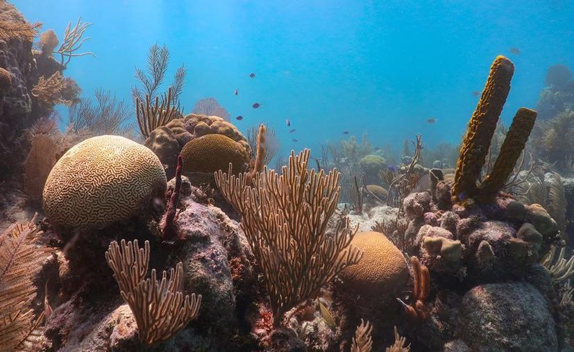 Banco Chinchorro: último santuario arrecifal de Quintana Roo