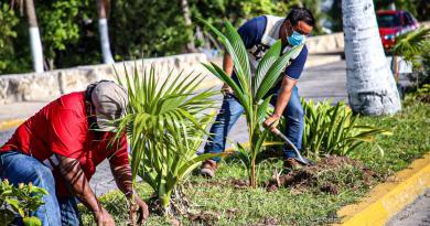 FOMENTA MUNICIPIO DE ISLA MUJERES EL CUIDADO AMBIENTAL CON REFORESTACIÓN DE PLANTAS