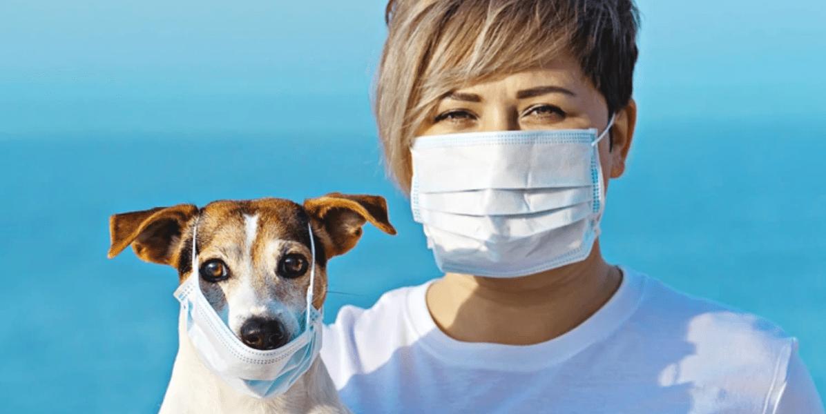 Cinco consejos útiles para el cuidado de tus mascotas en la cuarentena por coronavirus