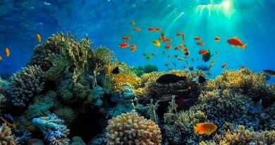 Asegurarán por segundo año arrecifes y playas de Quintana Roo