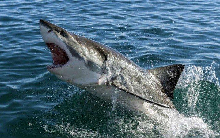 VIDEO: Tiburón persigue a una turista en playa de Cancún, no quieren humanos