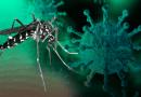¡Atención Cancún! Te diremos cómo diferenciar síntomas del Covid-19 y dengue