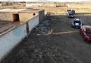 Hallan rastro de perros en Chihuahua; rescatan a 30 animales (VIDEO)