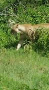 030 safari JP 6