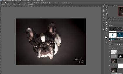 Bildbearbeitung von Frida in Lightroom und Photoshop