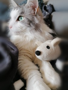Katze sitzt mit Plüschmaus zwischen den Pfoten auf der Sofadecke.