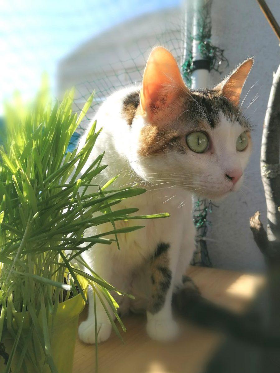 Katze mit Katzengras