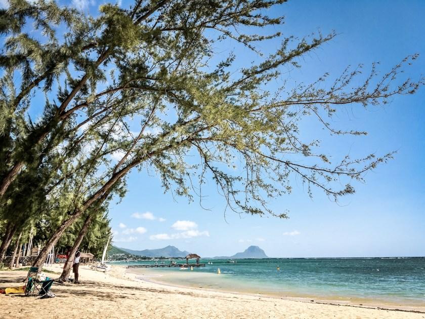 Meine geliebten Filaobäume am Strand