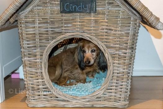 11 maanden en 3 weken oud - honden huis, kinderen en honden