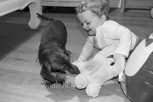 13 maanden oud - spelen met de hond