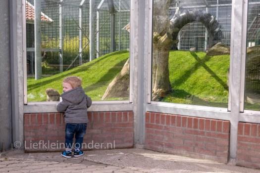 Blanckendaell - dreumes samen naar de dierentuin , museum en speeltuin