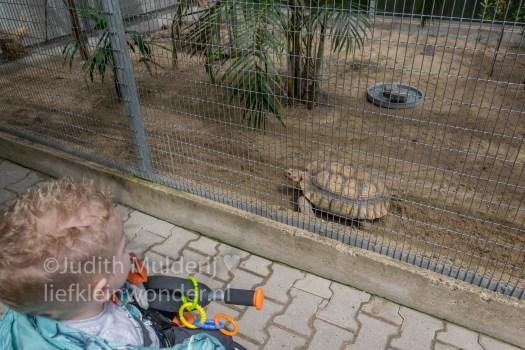 Jayden 18 maande en 2 weken oud peuter dreumes - Uitjes naar landgoed Hoenderdaell kippen, beren, vossen, hert, leeuwen stichting leeuw