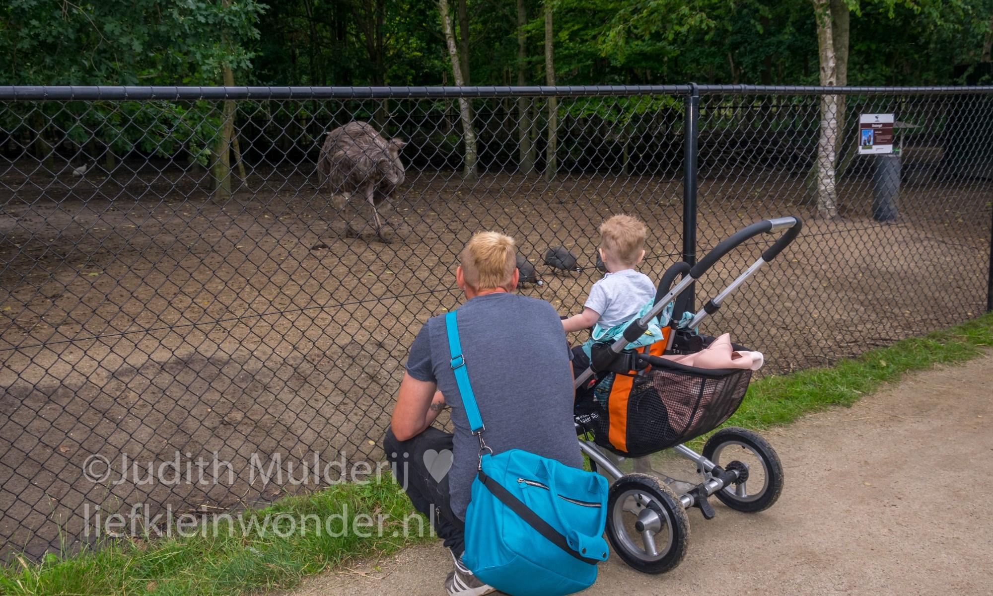 Jayden 18 maande en 2 weken oud peuter dreumes - Uitjes naar landgoed Hoenderdaell kippen, beren, vossen, hert, leeuwen stichting leeuw meerkat