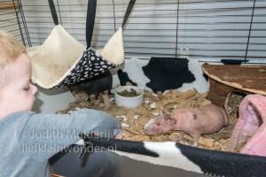 Jayden 19 maanden oud dreumes peuter - Skinny cavia