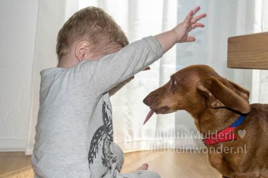 Jayden 19 maanden en 2 weken oud peuter dreumes - Dierenvriend met hondjes en cavia spelen