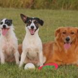 愛犬に教わって!犬式呼吸法で代謝がアップする!