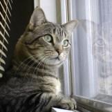 幸せ!猫カフェならぬ猫付きマンションとは?