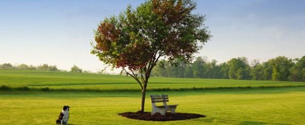 【心理テスト】四季折々姿を変える木