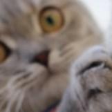 ストレス発散になり、遊べるベッドにもなる猫が喜ぶ人気のつめとぎ