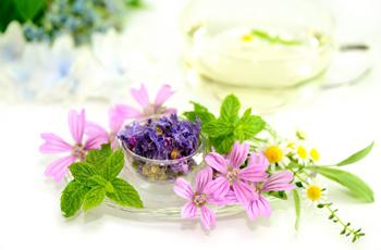 ハーブとお花 オーガニック 植物