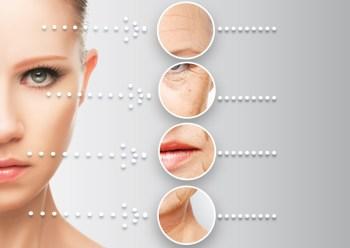 皮膚の老化