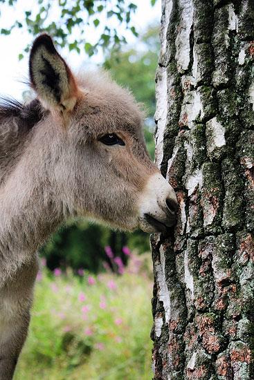 Een fotoblog foto als illustratie bij een verhaal over een ezel op een kinderboerderij.