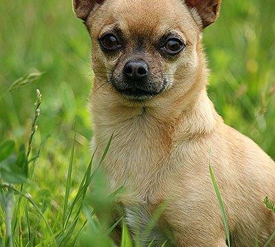 Een klein kuttenlikkertje of toch wel een leuk hondje? Een verhaal over Fiefje.