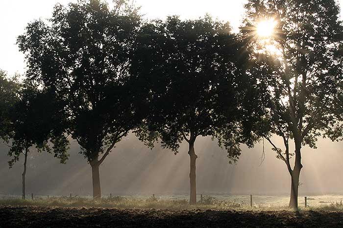 Bomen tijdens het ochtendlicht met mist ertussen
