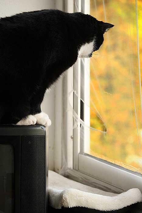 Doezel kijkt vanaf de tv naar de kapotte hor.