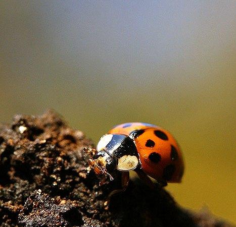 Fotoserie: Lieveheersbeestjes