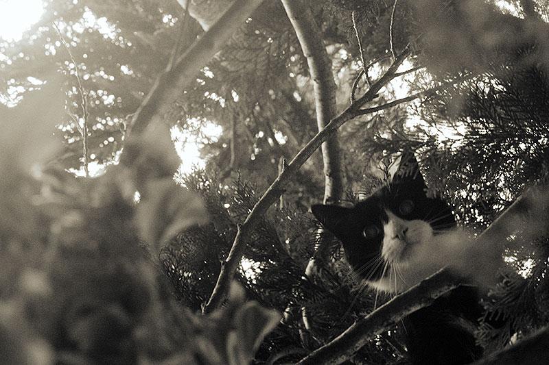 Mijn domme kater zit in de boom