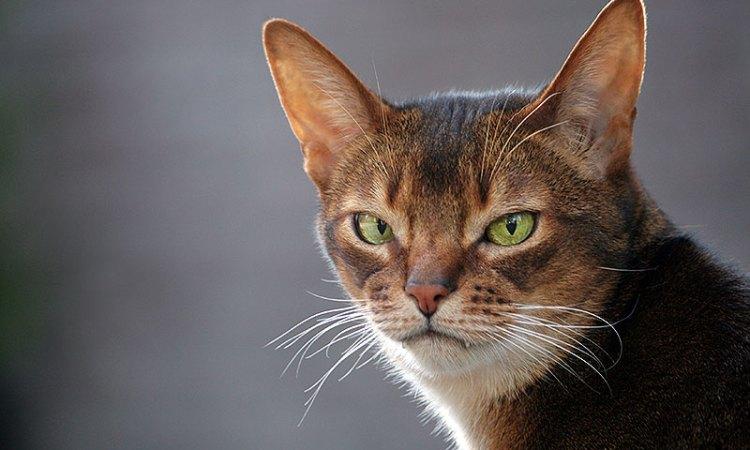 Redenen waarom de kat boos op je is