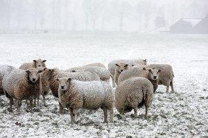 Fotoserie: Geef mij maar sneeuw