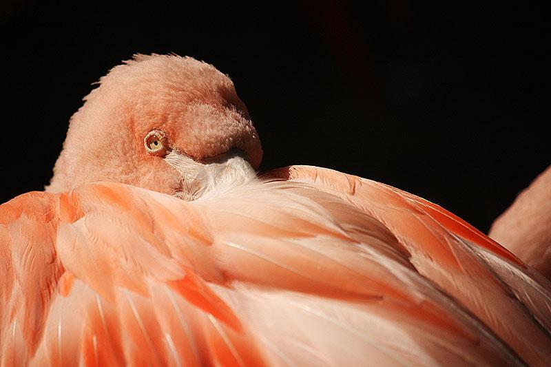 Lees hier waarom je dit jaar nog naar de dierentuin in Overloon moet gaan