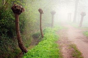 Fotoserie: Lente in de mist