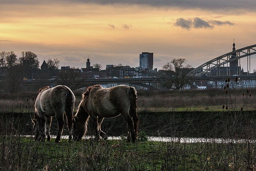 Fotoserie: Ik heb niet echt iets met paarden