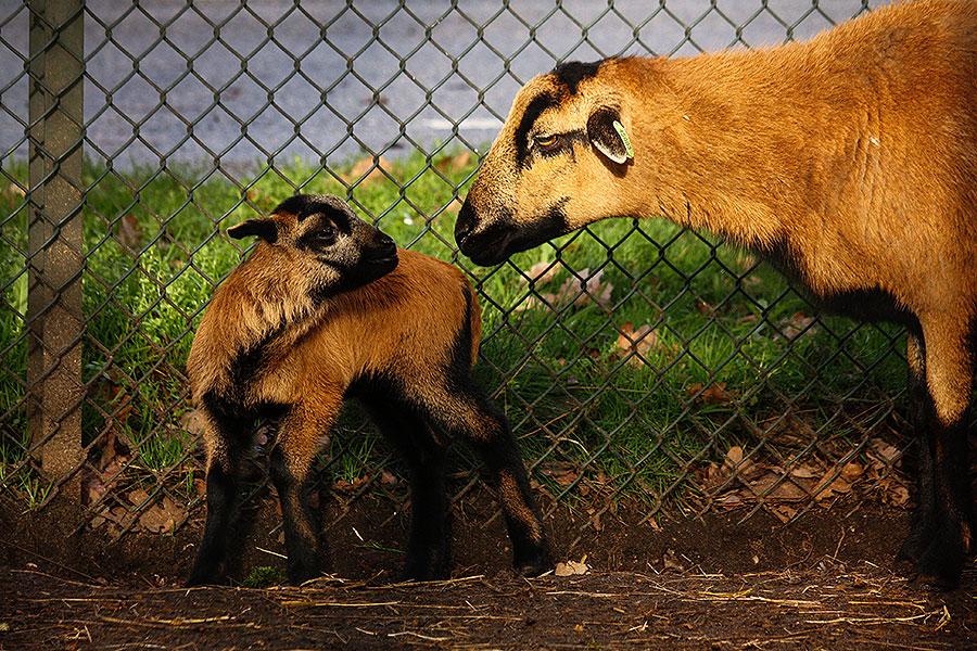 Dierenpark Zie-Zoo te Volkel