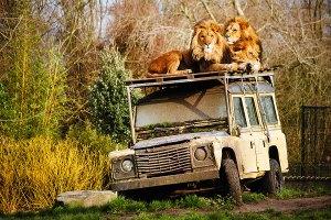 Leeuwenmannen