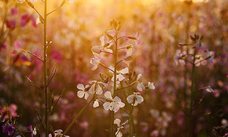 Fotoserie: Die mooie bloemetjes