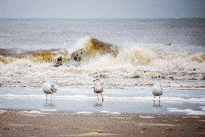 Fotoserie: Strandweer aan de Hoek
