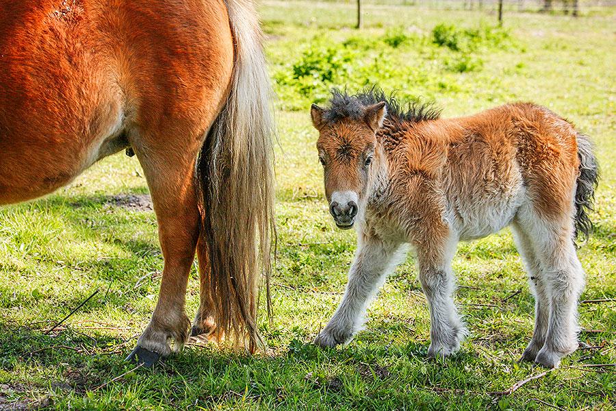 Fotoserie: De klein uitgevallen pony