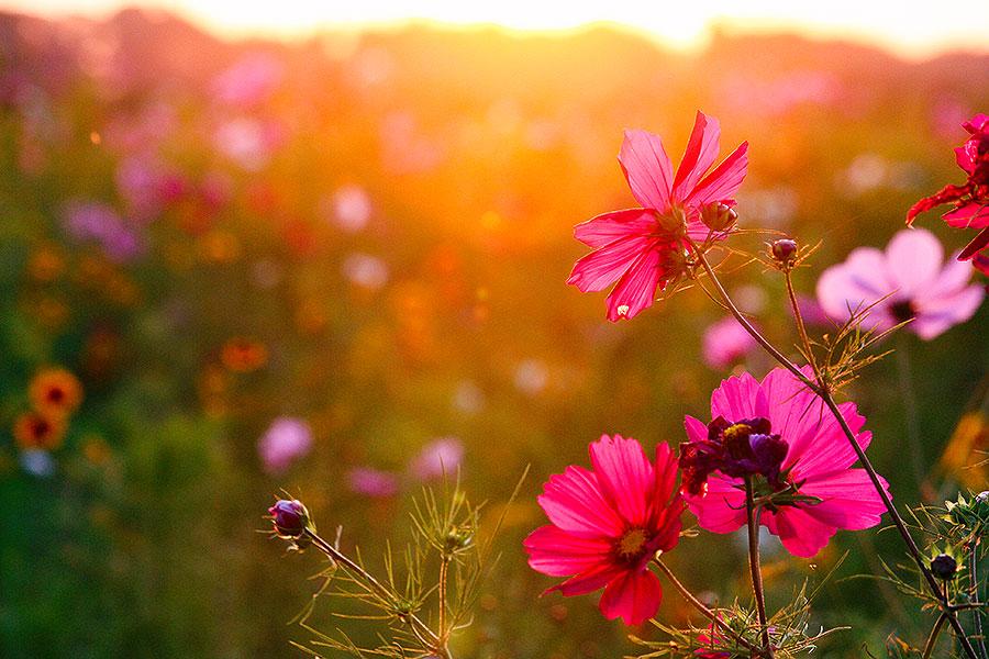 Fotoserie: 13 minuten bloemen