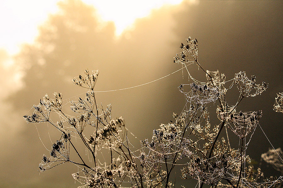 Fotoserie: Mist om vroeg voor op te staan