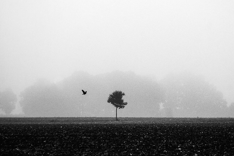 Fotoserie: De leegte van de mist