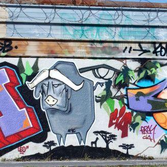 Buffalo on the wall
