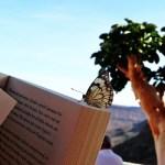 Summer in the City – meine Lieblingsbücher gegen Fernweh